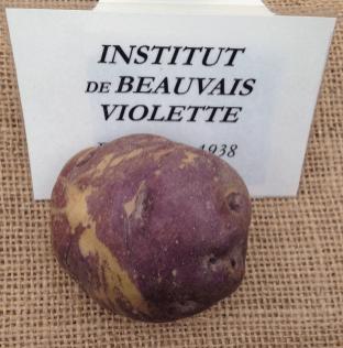Mandillo dei Semi 2015 - Patata Institut de Beauvais Violette