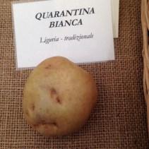 Mandillo dei Semi 2015 - Patata Quarantina Bianca