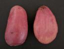 patata-magenta-love-1