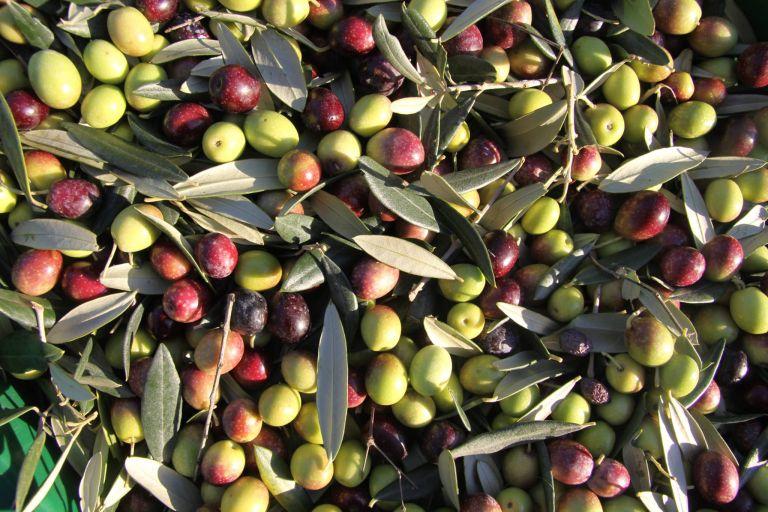il-cignale-olive