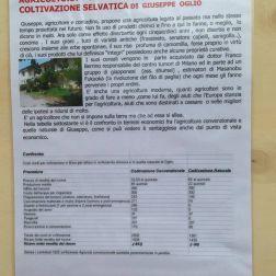 AGRICOLTURA NATURALE E PERMANENTE IN COLTIVAZIONE SELVATICA DI GIUSEPPE OGLIO