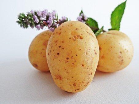 Attenzione: non mangiate le patate verdi con germogli. Intossicazione da solanina. Sintomi e prevenzione.