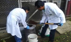 Durante la etapa de investigación de los biobeds se probaron con diferentes cantidades de suelo, compost y cascara de coco hasta encontrar una proporción óptima de la biomezcla.