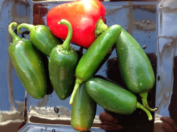 Chillies - Red & Green