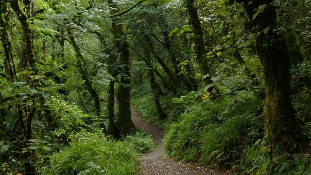 September 2014 St Gobnait's Wood. Ballyvourney, Co. Cork, Ireland