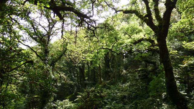 September 2014 St Gobnait's Wood, Ballyvourney, Co. Cork, Ireland