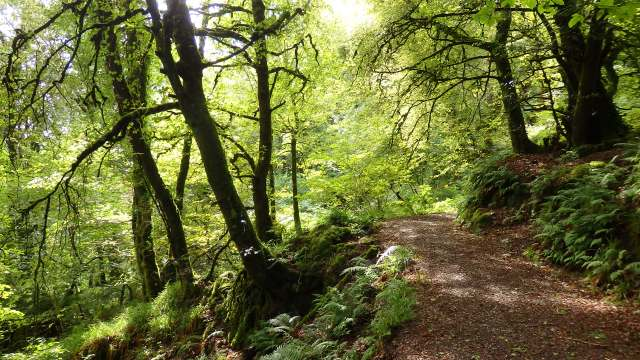 September 2014 St Gobnait's wood Ballyvourney, Co. Cork Ireland
