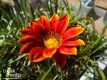 pantai reo flores22