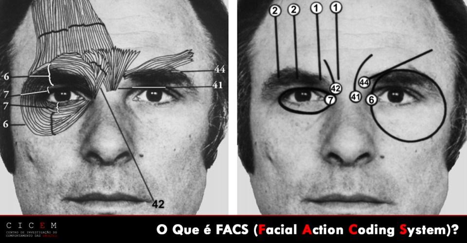 Facial Action Coding System Paul Ekman Action Units Upper Face
