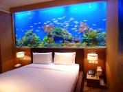 aquarium chambre 5