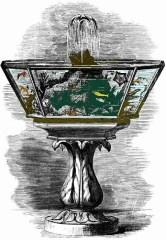 Histoire Aquariophilie (9)