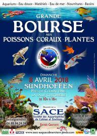 2018-04-08-bourse-aux-poissons-coraux-sundhoffen