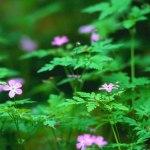 Forest-Flowers.jpg
