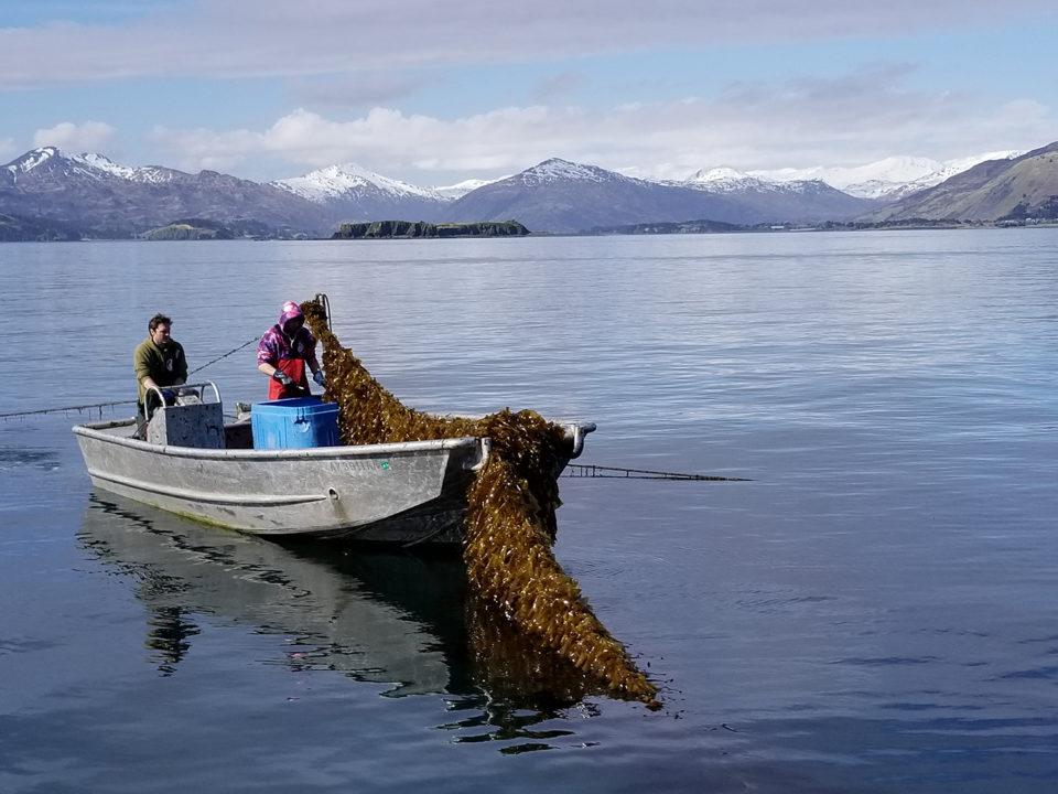 fishermen in boat with net