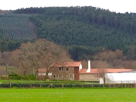 A Casa do Viveiro