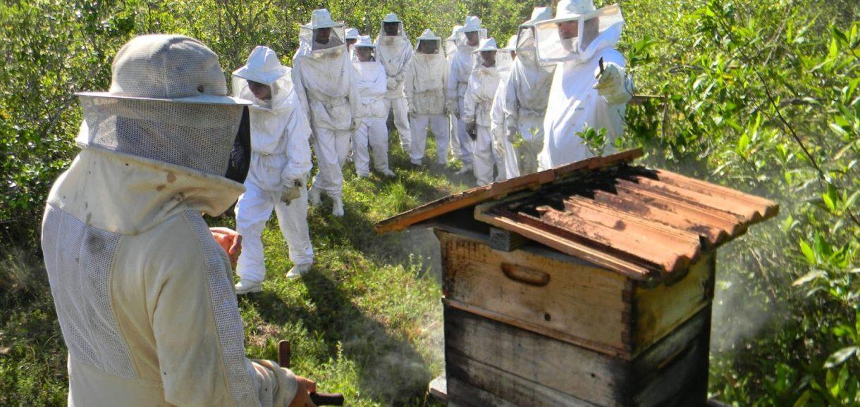 Apicultores descobrem nova flor e produção de mel aumenta em 30% em Picos