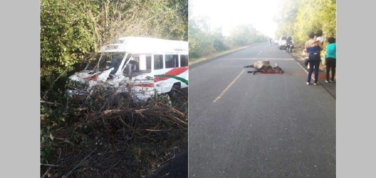 Van com passageiros colide com animal no interior do Piauí