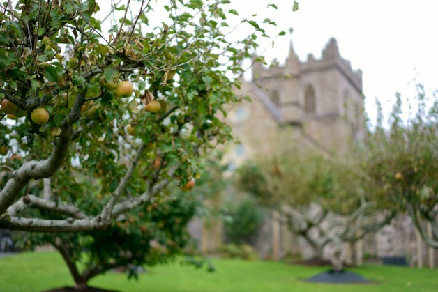 ORCHARD IN THE CHURCH