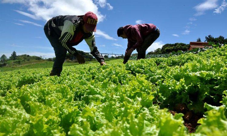 Agricultura-producción