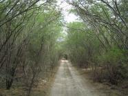 ciencia de cuba_ciencia cubana__Reserva Ecológica Siboney-Juticí_ecosistemas terrestres vulnerables_Santiago de Cuba_1