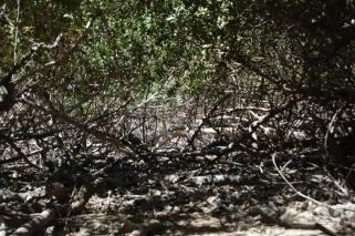 ciencia de cuba_ciencia cubana_manglares de cuba_santiago de cuba_III Taller Regional de Formación de Capacidades para el Manejo Costero (7)