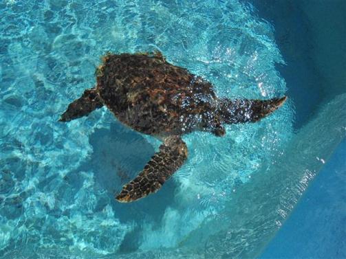 ciencia de cuba_portal de la ciencia cubana_acuario de baconao_reserva de la biosfera baconao (17)