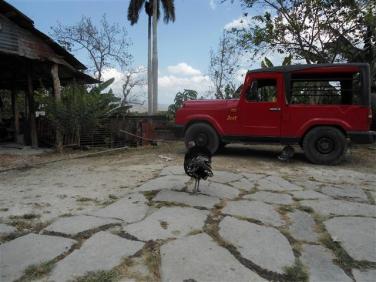 ciencia de cuba_portal de la ciencia cubana_protección de especies cinegéticas (14)