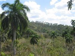 ciencia de cuba_portal de la ciencia cubana_protección de especies cinegéticas (31)