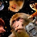 Respuestas X: ¿Por qué los monos no han evolucionado hasta convertirse en humanos?