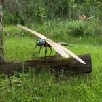 ¿Por qué las libélulas eran más grandes en el pasado?