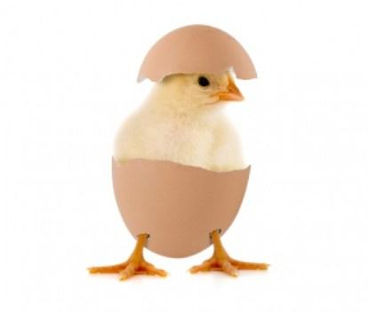 ovo e cancer - Porque o ovo é cancerígeno e ninguém fala sobre isto