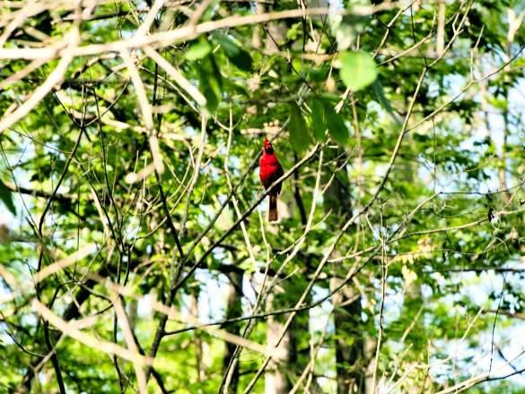 Uwielbiam te kolorowe ptaki!