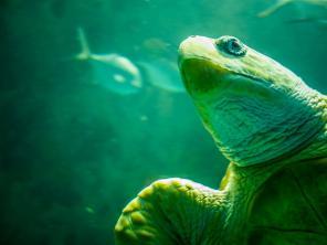 Bliskie spotkanie z żółwiem