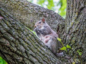 Wiewiórka - nie mogło zabraknąć :)
