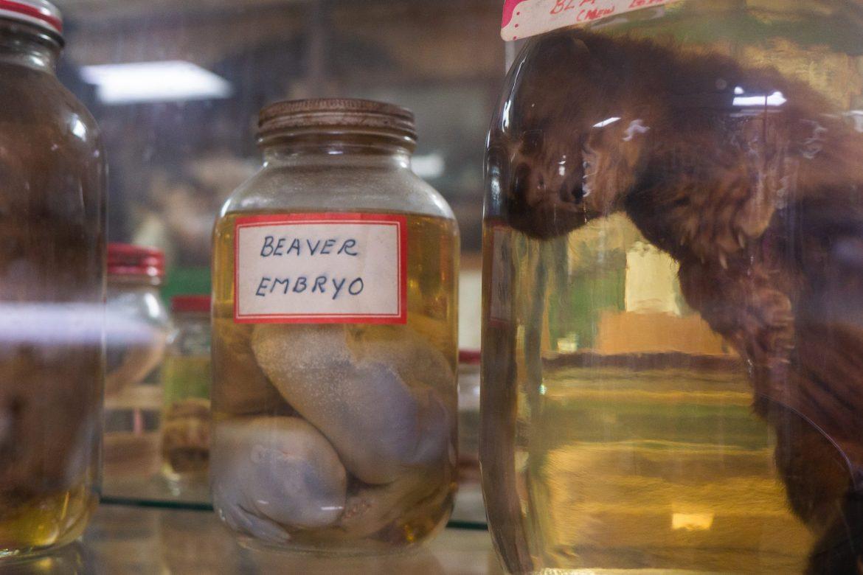 Embriony w słoikach, Space Farms