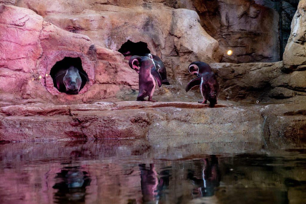 Pingwiny w akwarium