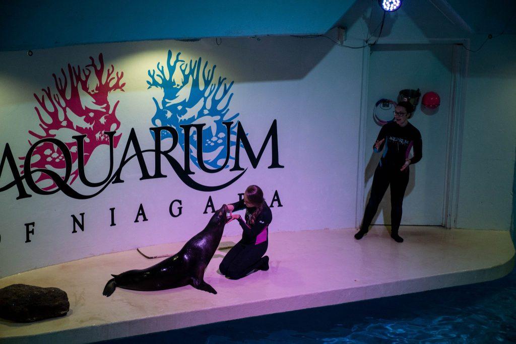 Akwarium - foczy pokaz