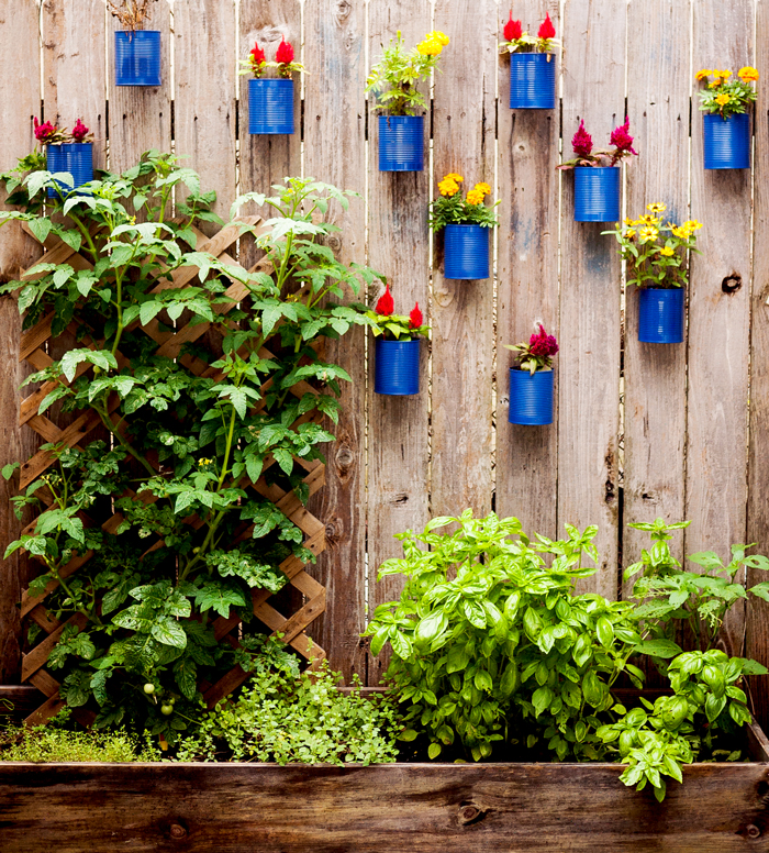 Backyard Tin Can Fence Garden