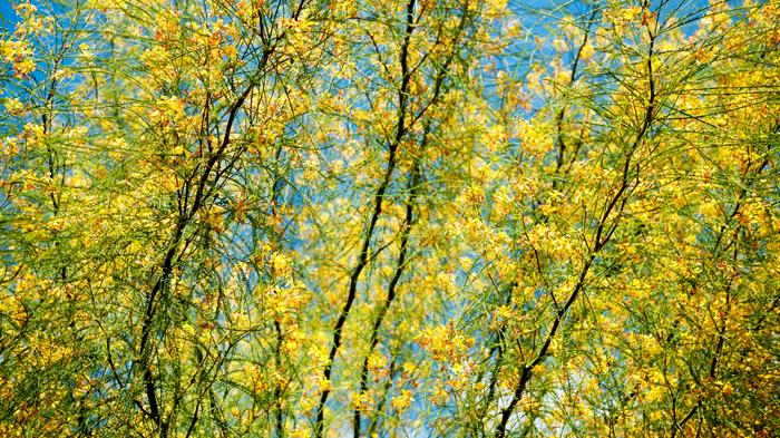 Port-Vell-Flowers-Barcelona-Spain