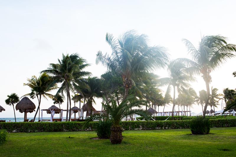 Palm Trees on Tulum Beach