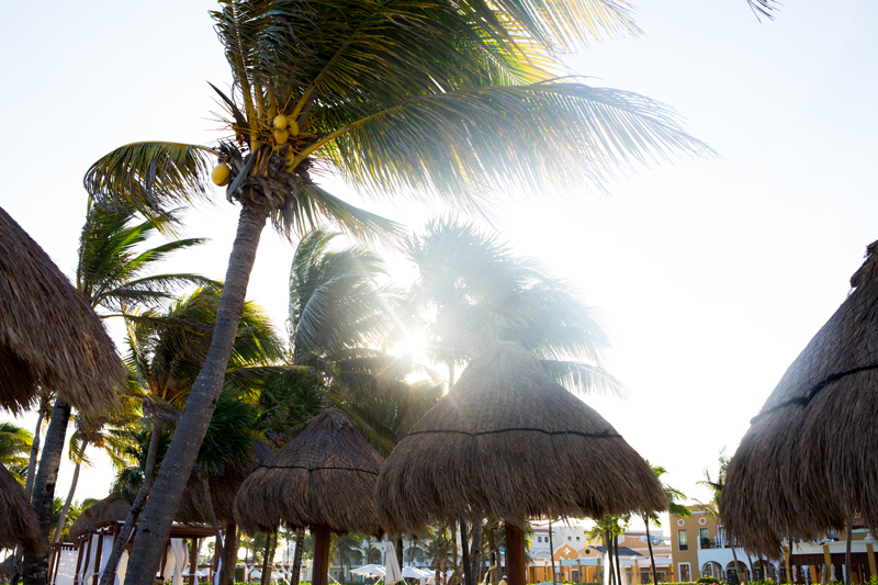 Palm Trees Sun Flair Tulum