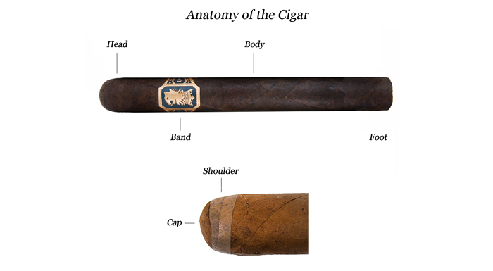 Cigar anatomy