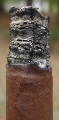 Don Lino Africa Duma - Dark Ash
