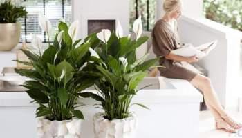 Рослини в домі сприяють довшому життю людини