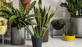 8 рослин, що допоможуть позбавити дім від негативної енергетики