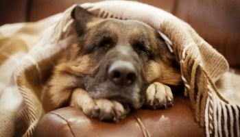 Чоловік лише погладив собаку, бродячий пес ліг і заплакав…