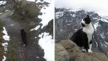 У горах Швейцарії кішка допомогла подорожньому знайти дорогу додому