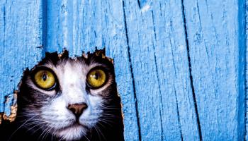 Кіт кожен день зустрічав мене з роботи біля дверей. Ось так несподівано я і знайшла відданого і доброго друга.Зараз, я навіть уявити не можу своє життя без нього