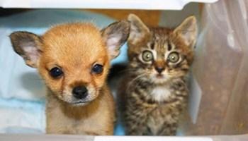 Маленьке кошеня врятувало цуцика і тепер вони найкращі друзі