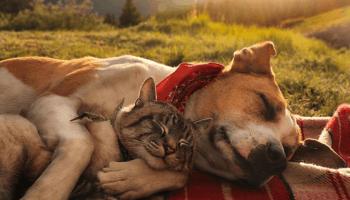 17 картинок про те, наскільки глибокими і різноманітними можуть  бути почуття звірів